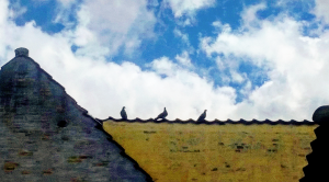 Three birds perch on a yellow rooftop against a blue August sky in Lyngby, Denmark.